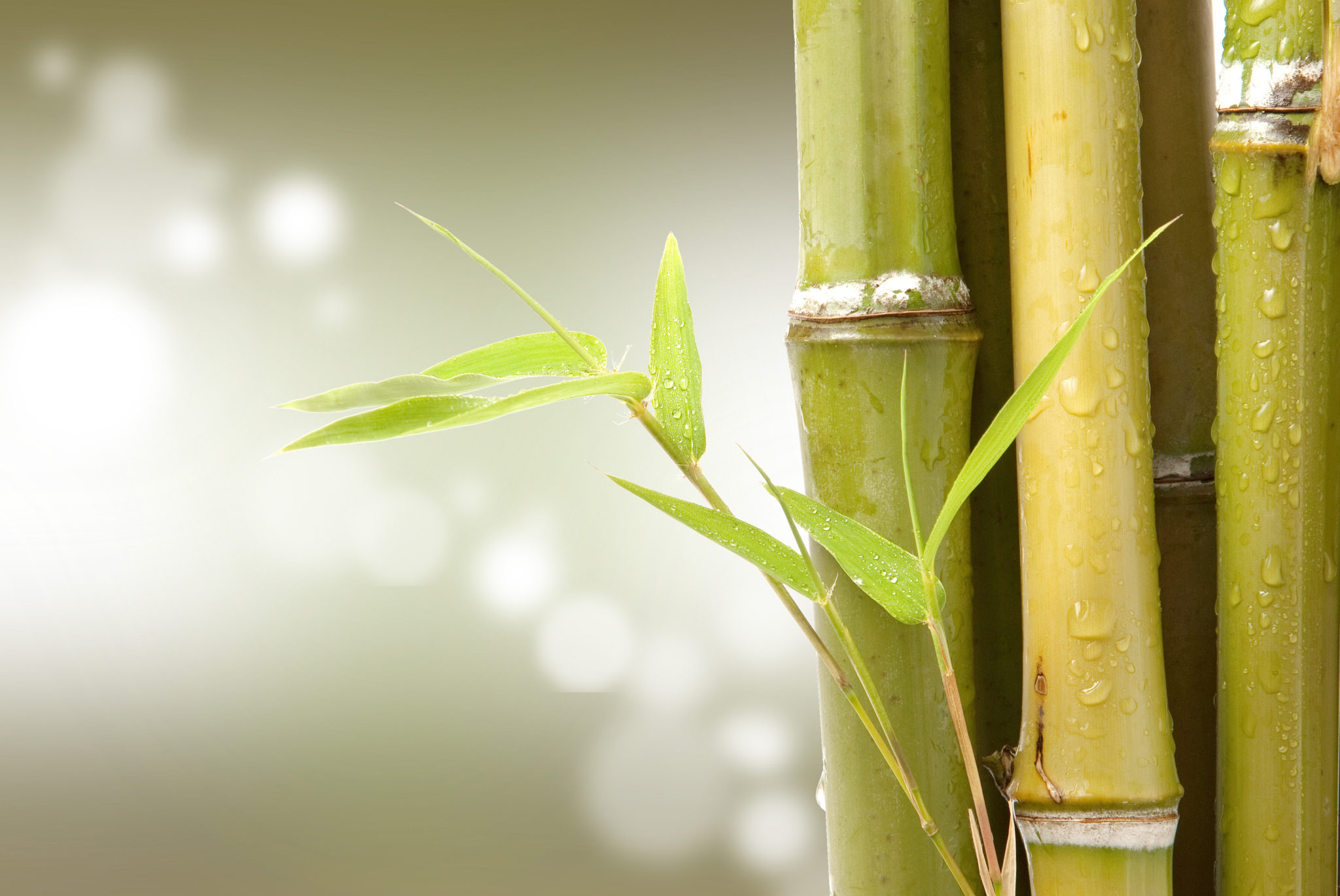Bambu and Verde Organic Collections